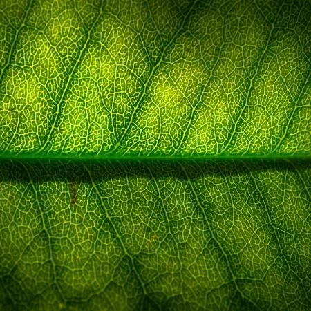 leaf-2234666_1280