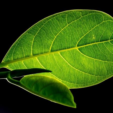 leaf-299931_1280